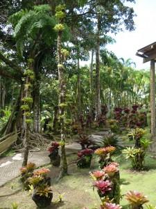 jardins de balata martinique (3)