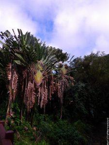 Hawaï, île d'Oahu (24)