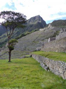 Machu Picchu (6)