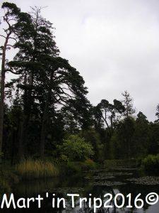 fota arboretum (21)