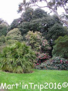 fota arboretum (4)