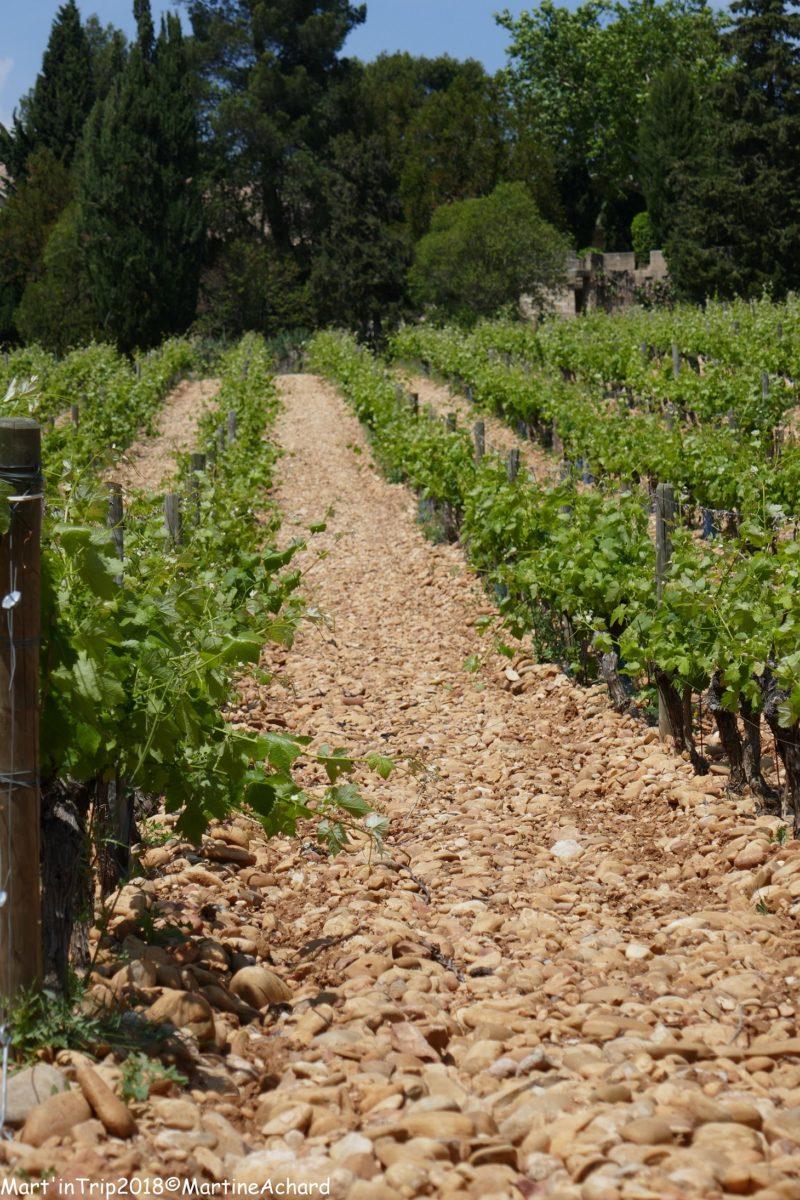 vignobles avignon