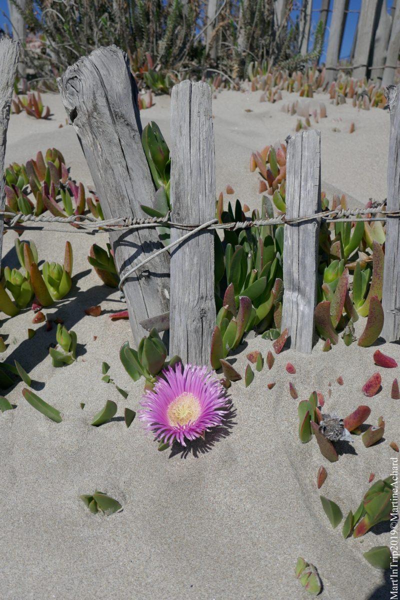 plage sète